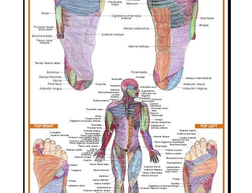 Muscular Reflexology